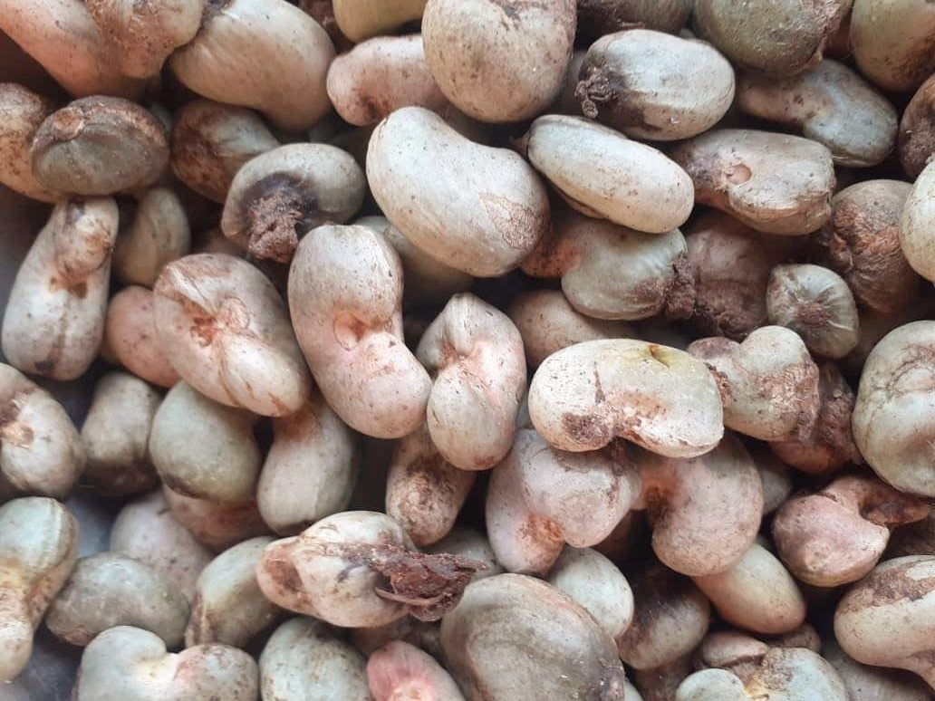 Cashew Nuts - TOSK Global