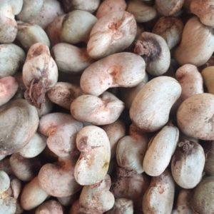 CASHEW NUTS - TOSK Global Ventures