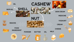 Cashew nuts and cashew shell products and uses